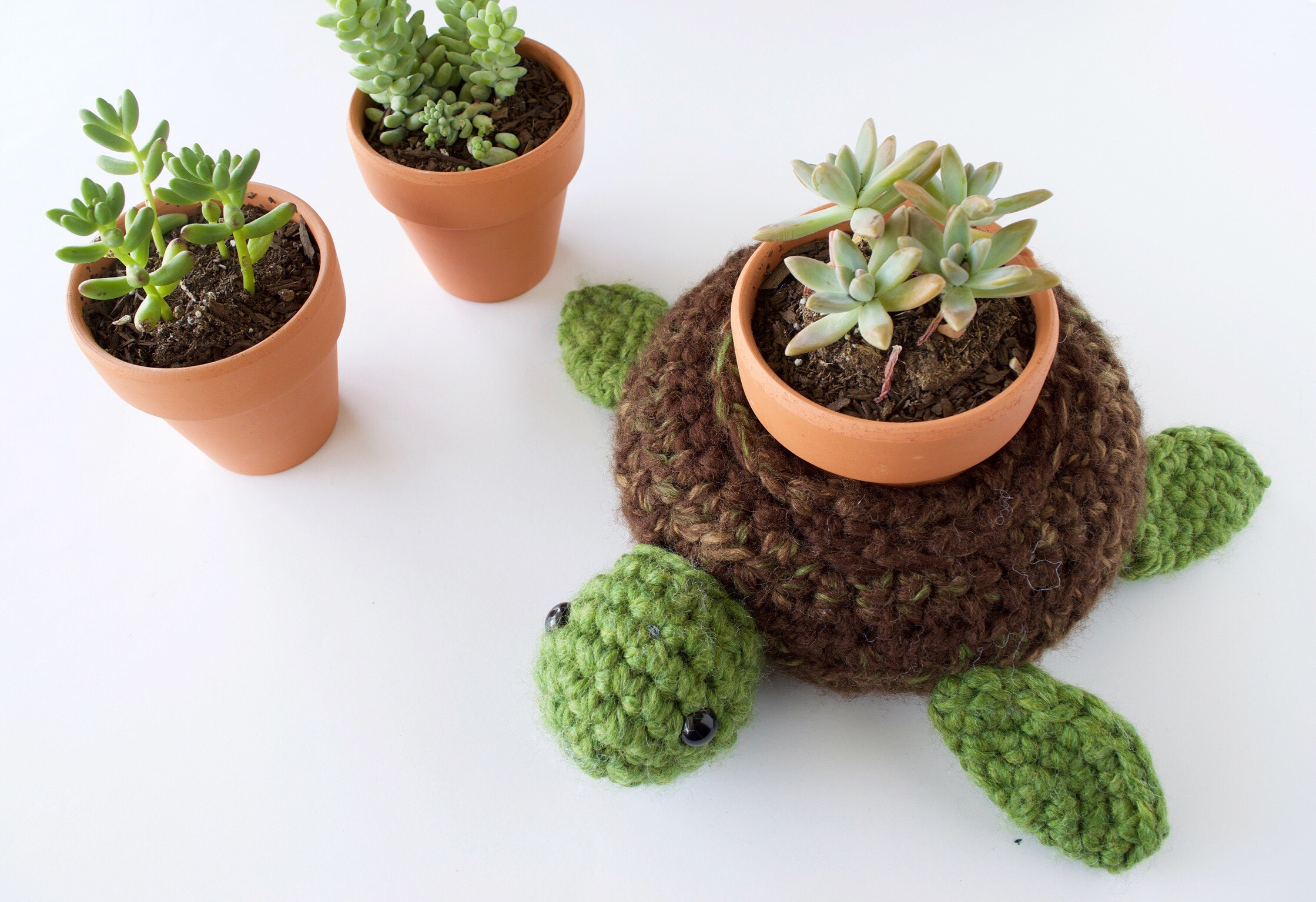 World Turtle Succulent Holder - Knot Bad